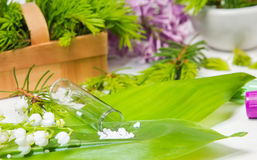 Lily of the valley, globules, Convallaria Stock Image