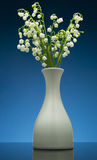 Lily of the valley on gradient blue background with reflection Stock Images