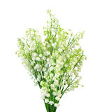 Lily-of-the-valley with isolated background Stock Photo