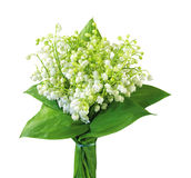 Lily-of-the-valley with isolated background Stock Images