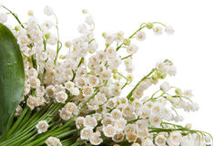 Lily of the valley isolated Royalty Free Stock Photography