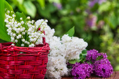 Lily of the valley and lilac Stock Image
