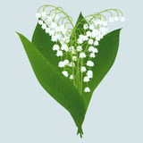 Lily of the valley. Lilies of the valley  on light background Stock Photo