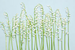 Lily of the valley. Lined in a row, background Royalty Free Stock Photos