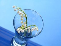 Lily of the valley over blue background Royalty Free Stock Images