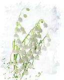 Lily Of The Valley Watercolor Immagini Stock Libere da Diritti