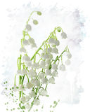 Lily Of The Valley Watercolor Royalty Free Stock Images