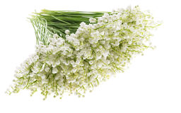 Lily of the valley on white background isolated. Romantic bouque Stock Image