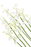 Lily-of-the-valleyblumen auf Weiß Lizenzfreie Stockfotos