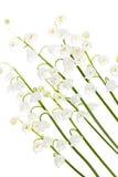 Lily-of-the-valleyblumen auf Weiß Lizenzfreie Stockfotos