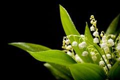 Lily-of-the-valleyblumenstrauß Lizenzfreie Stockbilder