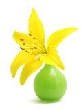 Lily in vase Stock Image