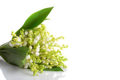 Lily of the walley left position Stock Photography
