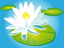 Lily and water lily Royalty Free Stock Photo