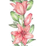 Lily 3. Watercolor painting Royalty Free Stock Photo