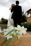 Lily Wed Royalty Free Stock Photography