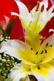 lily white fotografia stock