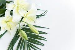 lily white Obrazy Stock