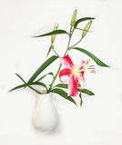 Lily in white vase. Beautiful lily in white vase Stock Photo