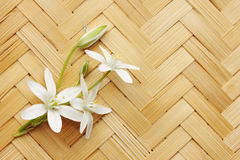 Lily on a wicker board Royalty Free Stock Image