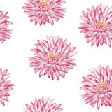 lily wody Akwarela bezszwowy wzór Fotografia Royalty Free