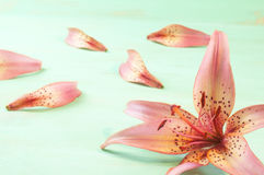 Lily on the wooden background Royalty Free Stock Photos
