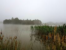 Lilydale湖 免版税库存照片