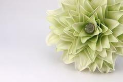 Lilymelia Blume auf weißem Hintergrund Lizenzfreie Stockfotografie