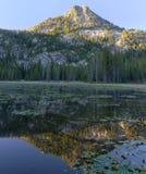 Lilypad Lake Royalty Free Stock Photography