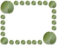 Lilypads. Lilypad framed border Royalty Free Stock Images