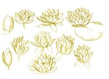 Lilys da água ilustração royalty free