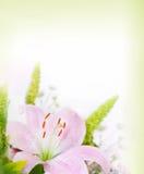 Lilys Hintergrund Stockfoto