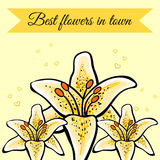 LilyVector-16. Hand-drawn 3 yellow lilys. Vector background. 10 EPS Royalty Free Stock Images