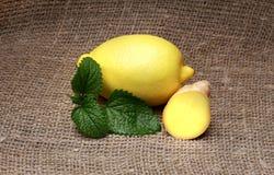 Limão - amarelo e hortelã em um fundo isolado Imagem de Stock Royalty Free