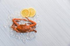 Limão e gelo cozinhados cozinhados caranguejo do marisco no fundo de madeira branco/caranguejo nadador azul imagens de stock royalty free