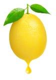 Limão fresco Imagem de Stock Royalty Free