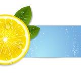 Limão fresco Imagens de Stock