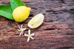 Limão fresco Fotografia de Stock Royalty Free