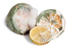 Limão Mouldy imagens de stock