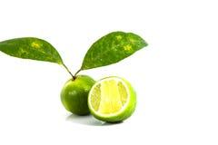 Limão no fundo branco Fotografia de Stock