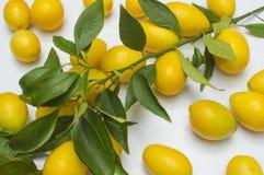 Limão pequeno com folhas Fotos de Stock Royalty Free