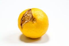 Limão podre isolado no branco fotos de stock