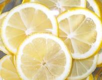 Limão suculento fotos de stock