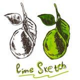 limão, toques da cor e o esboço Ilustração Royalty Free