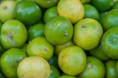 Limão verde fresco Imagem de Stock Royalty Free