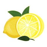 Limón de restauración - fruta exótica Vector Fotos de archivo