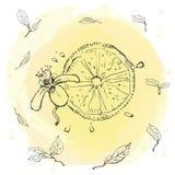 Limón de restauración - fruta exótica Vector Foto de archivo libre de regalías