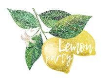 Limón del vector Partido del limón Fotos de archivo