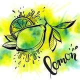 Limón dibujado mano estilizada Imágenes de archivo libres de regalías