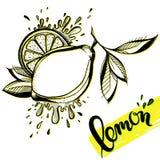 Limón dibujado mano estilizada Fotografía de archivo libre de regalías